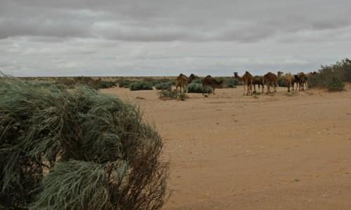 Zdjecie MAROKO / Sahara Zachodnia /  Sahara / Mieszkańcy Sahary