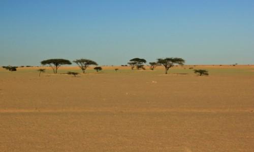 Zdjecie MAROKO / Sahara Zachodnia /  Sahara / Kolory pustyni