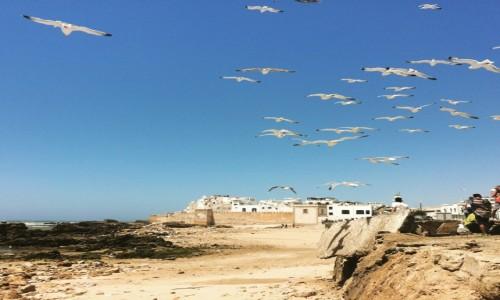 MAROKO / Essaouira / Essaouira / Essaouira