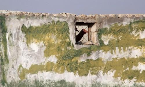 Zdjecie MAROKO / Sahara Zachodnia / gdzieś po drodze / Ratunku