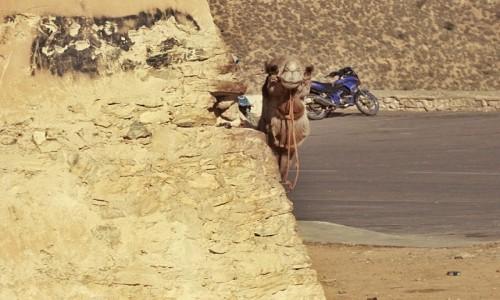Zdjecie MAROKO / Agadir / Medyna / A kuku