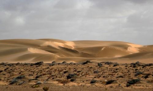 Zdjecie MAROKO / Sahara Zachodnia / gdzieś po drodze / Porcja świeżego piasku
