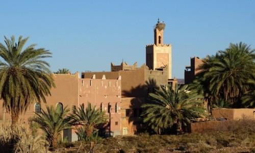 MAROKO / Południe / Ouarzazate / Na dowód, że jeszcze nie odleciały