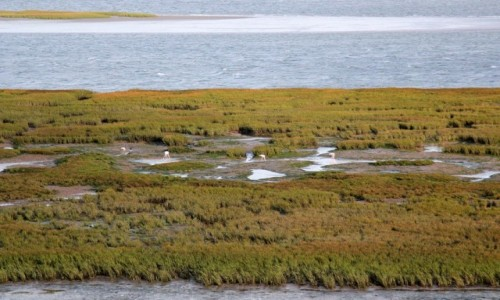 MAROKO / Laâyoune-Sakia El Hamra / Park Narodowy Khenifiss / Laguna między pustynią,a oceanem