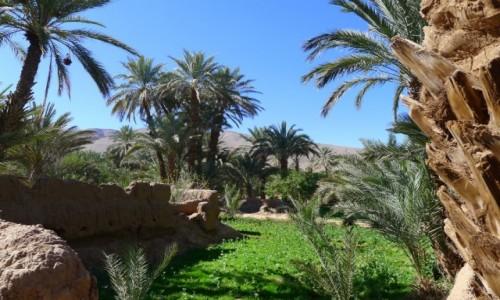 Zdjecie MAROKO / Południowe  Maroko  / Gdzieś po drodze  / W palmowym gaju