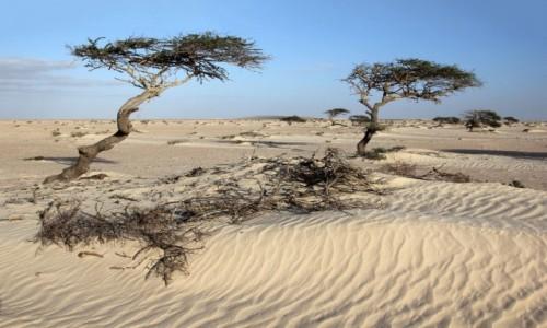Zdjecie MAROKO / Sahara Zachodnia / w piaskach Sahary / Z wiatrem...