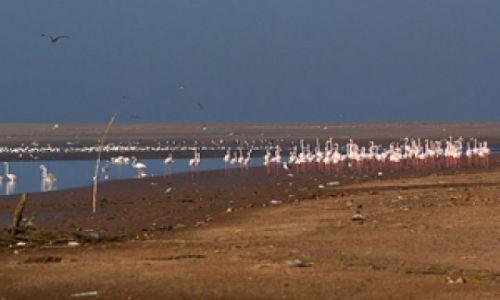 MAROKO /  Susaria / Agadir / Esuarium rzeki Sus