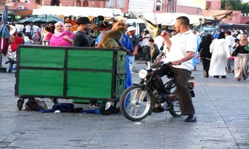 Zdjecie MAROKO / trasa Fez - Marrakesz / gdzieś na trasie / Plac Dżama el-Fna