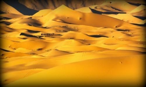 Zdjecie MAROKO / południe / Erg Chebbi / Sahara 123