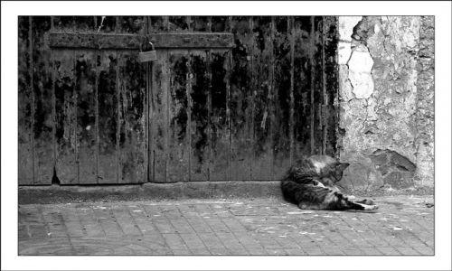 Zdjęcie MAROKO / As Sawira / brak / Kot