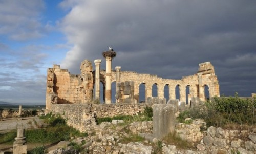 Zdjecie MAROKO / Fez-Meknès / Volubilis / Ruiny kapitolu