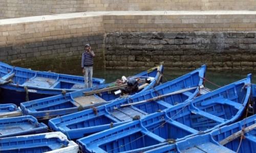 Zdjecie MAROKO / Marrakesh-Safi / Essaouira / Halo, rybko...