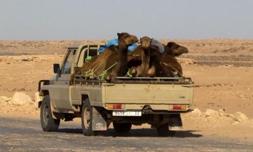 Zdjecie MAROKO / Sahara Zachodnia / gdzieś po drodze / Przeprowadzka w rejony turystyczne