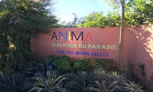 MAROKO / Okolice Marrakeszu / Okolice Marrakeszu- Anima / Anima - ogród