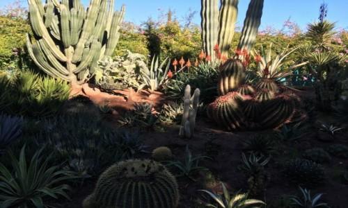 Zdjecie MAROKO / Okolice Marrakeszu / Okolice Marrakeszu- Anima / Anima - ogród -kaktusy