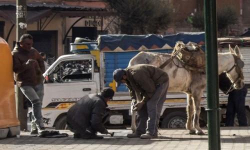 Zdjecie MAROKO / Maroko / gdzieś po drodze / Koń w głównej roli
