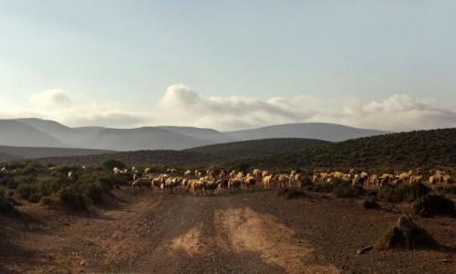 Zdjecie MAROKO / Kulmim-Asmara / gdzieś po drodze / Szlakiem Rajdu Dakar