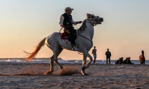 Zdjecie MAROKO / Mohammedia  / na plaży / Rozrywki na plaży