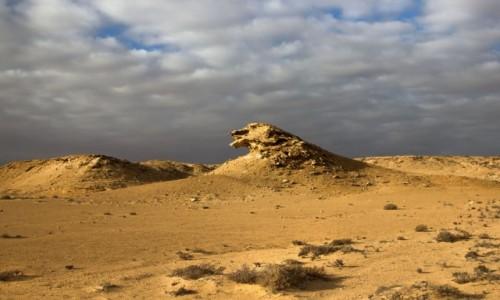 Zdjecie MAROKO / Sahara Zachodnia / w piaskach pustyni / Ptak pustyni