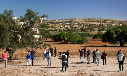 Zdjecie MAROKO / Marrakesz-Safi / gdzieś po drodze / Przyjechał autobus do kozy