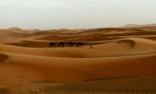 Zdjęcie MAROKO / Sahara / Erg Chebbi / Niezwykły urok Sahary