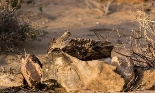 Zdjecie MAROKO / Sahara Zachodnia / Khaoui Naam / W kamuflażu