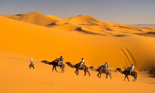 Zdjecie MAROKO / Maroco / Maroco / Pustynia