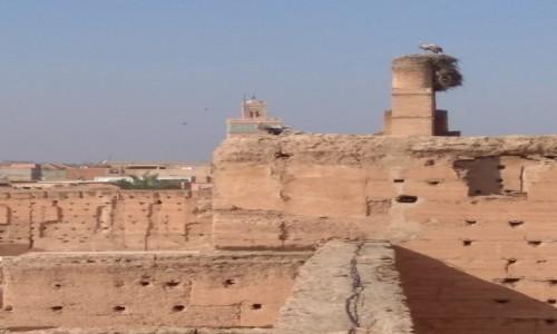 Zdjecie MAROKO / Marakesz / Medina / Bociany w El Badi