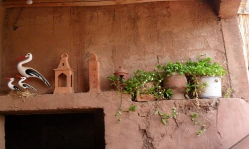 Zdjecie MAROKO / Marakesz / Ourika / W domu Berberów