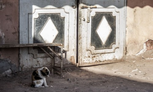 Zdjecie MAROKO / Souss - Massa - Daraa / Tadoula-n-Aït Touaya / W cieniu