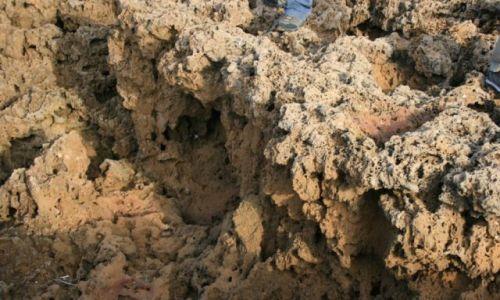 Zdjecie MAROKO / wybrzeże Maroka / przed Es-Sawirą / skała gąbczasta Atlantyku
