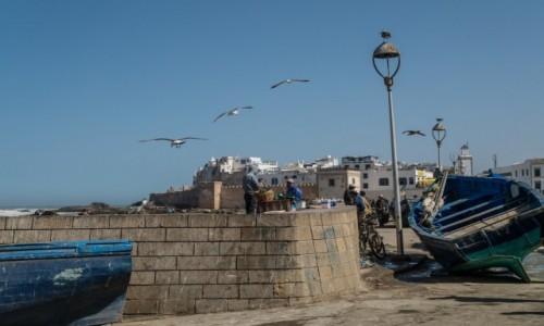 Zdjecie MAROKO / Marrakesz-Safi / Essaouira / nad Atlantykiem
