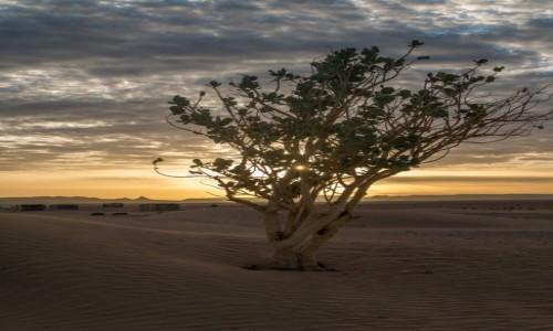 Zdjecie MAROKO / Dara-Tafilalt / Sahara / Putynię upiększa to, że gdzieś w sobie zwiera studnie