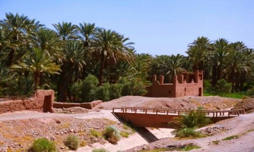 Zdjecie MAROKO / Ouarzazate / El Klaa / Gaj daktylowy