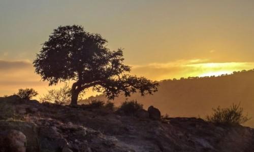 Zdjecie MAROKO / Maroko / gdzieś po drodze / Drzewo