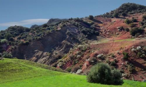 Zdjecie MAROKO / Maroko / gdzieś po drodze / Wiosennie...