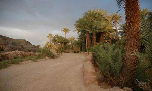 Zdjęcie MAROKO / Agdz / Tamnugalt / gaj palmowy przy bocznej drodze, klimatyczne miejsce, burzowy dzień