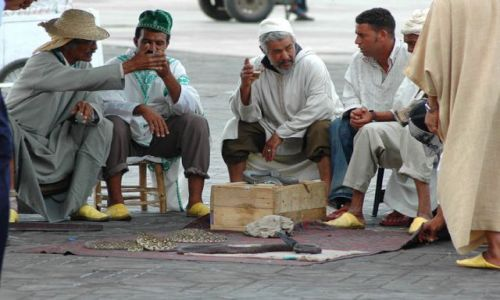 Zdjęcie MAROKO / Marrakesz / Dżemaa el Fna / zaklinacze węży