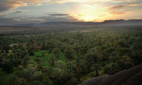 Zdjecie MAROKO / niedaleko Warzazat / Tamnugalt / gaj palmowy o zachodzie słońca