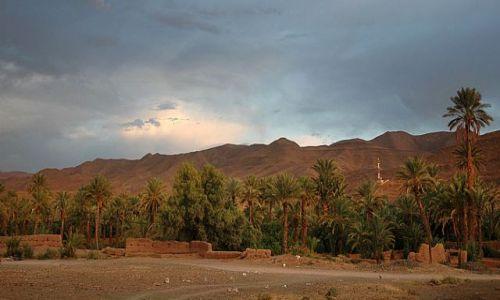 Zdjecie MAROKO / okolice Warzazat / Tamnugalt / gaj palmowy-panorama