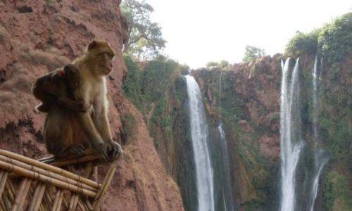 Zdjecie MAROKO / brak / Ouzoud / wodospady i małpa