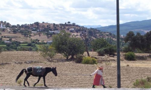 Zdjecie MAROKO / Góry Rif / Szefszawan / Berberyjka