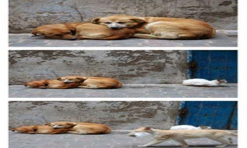 Zdjecie MAROKO / nad oceanem / Essauira / jak to pies z kotem;) - postwalentykowy krajobraz...:)