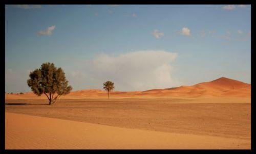 Zdjecie MAROKO / sahara / sahara / kiedy sie konczy pustynia
