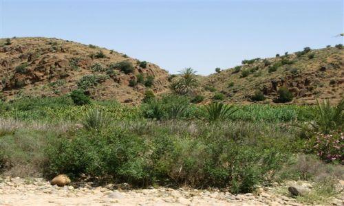 Zdjecie MAROKO / maroko / gory atlas / argan