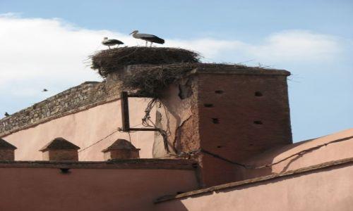 Zdjęcie MAROKO / okolice Zagory / w drodze / Nasze polskie?czy marokańskie?