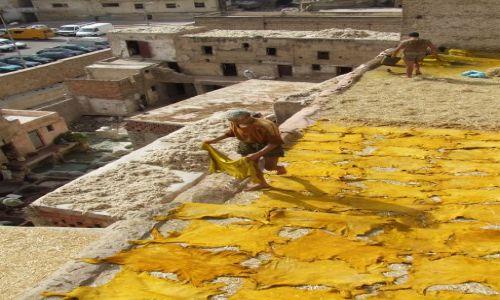 Zdjecie MAROKO / Fez / Fez / tak powstaje żółta skóra