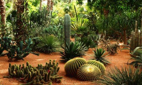 Zdjecie MAROKO / brak / Marrakech / Ogród Majorelle