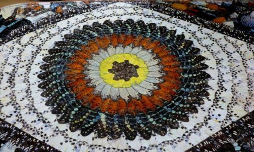 Zdjecie MAROKO / brak / Marrakesh / Obraz ze skrzydełek motyli