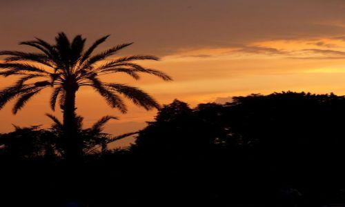 Zdjecie MAROKO / brak / Marrakesh / Zachód Słońca
